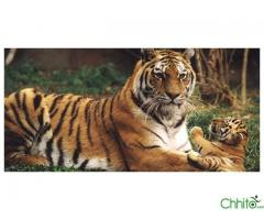 http://chhito.com/want-to-buy-buyer-list/travel-and-tours-1/jungle-safari-in-nepal_2656