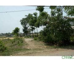 http://chhito.com/want-to-buy-buyer-list/real-estate-1/land-on-sale-ratnanagar-pithuwa-chitwan_3235