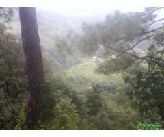 http://chhito.com/real-estate/land-plot-for-sale/1100000-ropani-ko-lapsephedi-ko-jagga-bikri-ma_3720