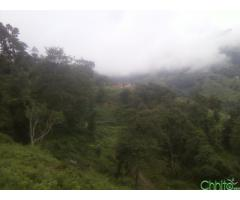 http://chhito.com/real-estate/land-plot-for-sale/250000-prati-ropani-ko-gadi-bato-bhayeko-jagga-bikrima_3755