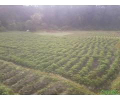 http://chhito.com/real-estate/land-plot-for-sale/farming-ko-lagi-upaukta-jagga-bikri-ma_3777